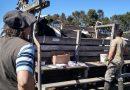 Senasa inició las tareas de verificación sobre el proceso de tuberculinización de los rodeos bovinos en establecimientos de todo el país