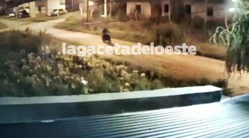 VIDEO del robo de una moto en pleno aislamiento social obligatorio