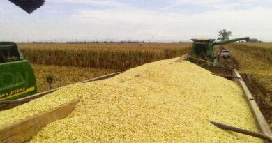 Récord de exportaciones de maíz